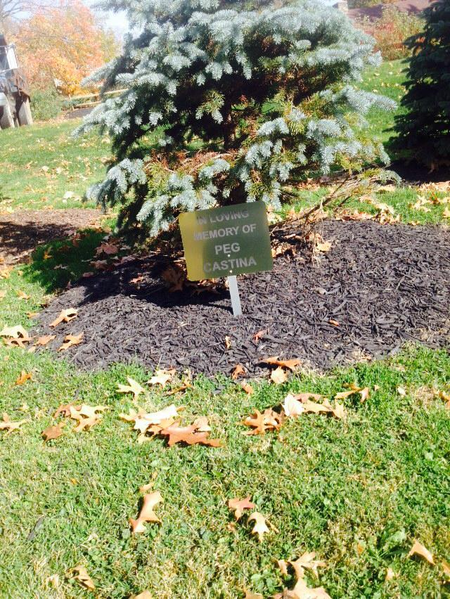"Sign stating ""In Loving Memory of Peg Castina"" in front of evergreen tree"