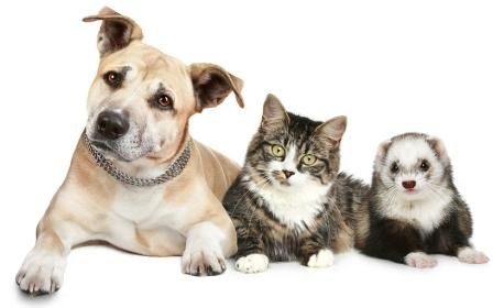 Dog, cat and ferret photo